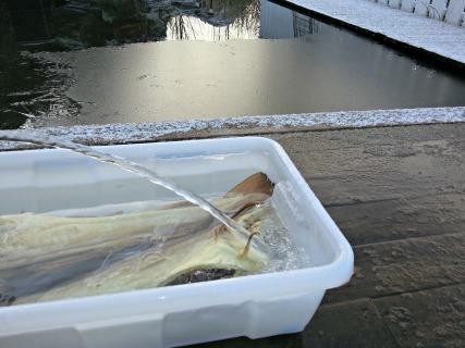 Det ble etterhvert litt snø og is, men likevel gode forhold for å jobbe med fisken utendørs