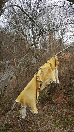Ferdige buckskin / Finished buckskins