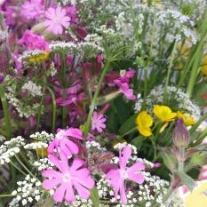 Sommerblomster bare til pynt på St. Hansaften / Summer flowers