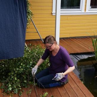 I sommer sanket vi bjørkekvister med blader