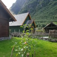 Den første eplehøsten i Njardarheimr / The first apple harvest in Njardarheimr